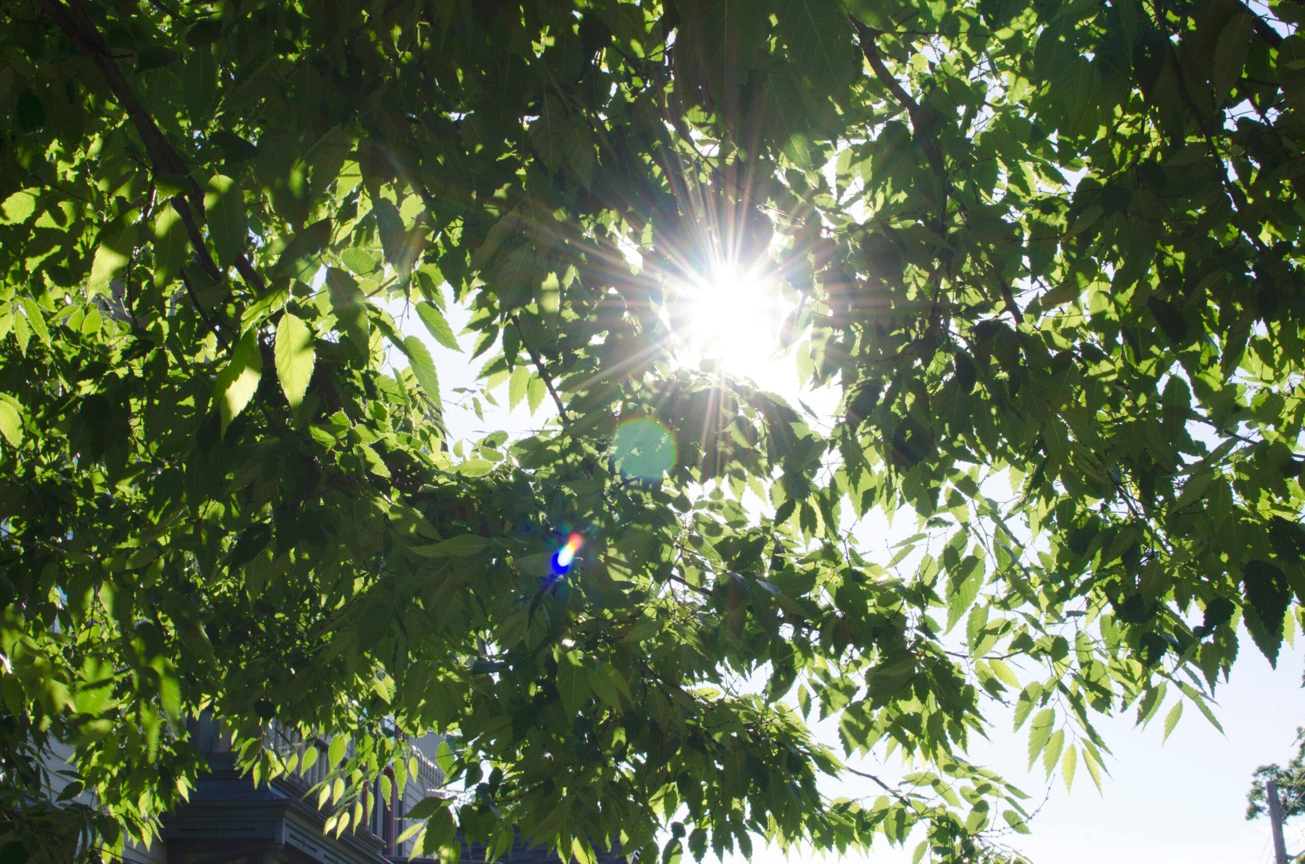 tree-X9DJ5CR-min
